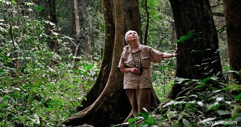 Jane Goodall in the Forest