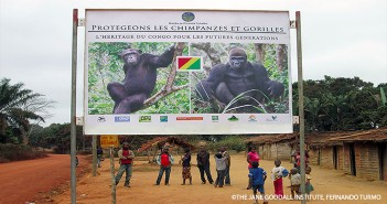 JGI Congo team puts up billboard around Congo 28 CRWM