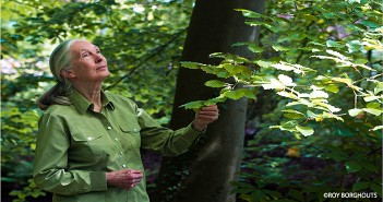 Dr. Jane Goodall at home in the forest.
