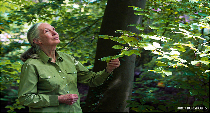 jane goodall essay This detailed literature summary also contains topics for discussion on in the shadow of man by jane goodall in the shadow of man gives the back story to jane.
