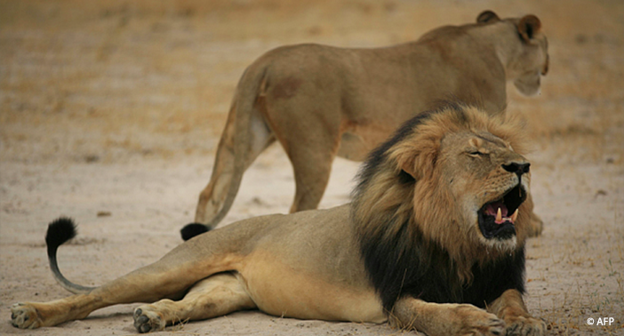 new report strikes a blow against trophy hunting jane goodall s