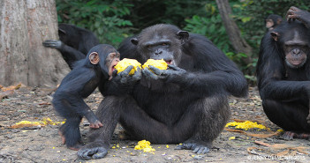 Thanks to the Desmond Family and the Human Society 29 year old Ettie shares a snack with 2 year old daughter, Bean.