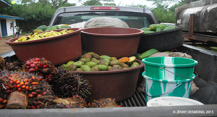 Thanks to generous donations, the chimpanzees are now provided daily with fresh fruits and vegetables.