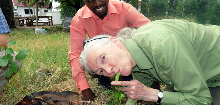 Dr. Goodall Kissing a Tree