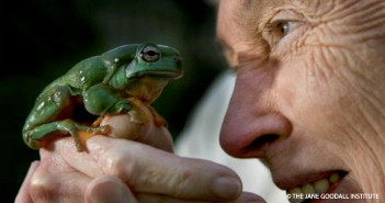 Jane and Whites Tree Frog_GFAN