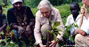 Jane Planting Trees