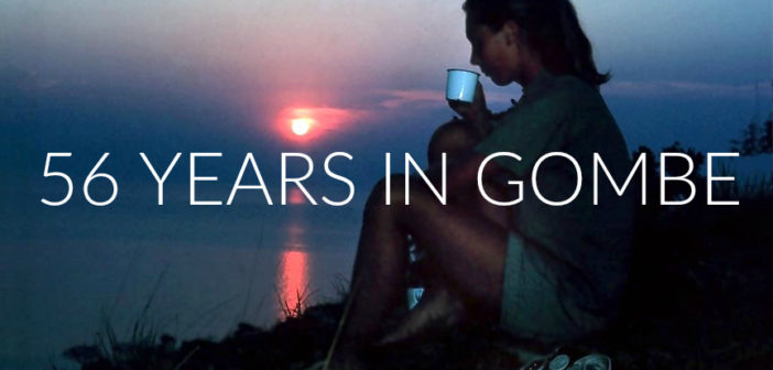 Jane Goodall sips coffee and watches the sun set over Lake Tanganyika. December 1962 © the Jane Goodall Institute