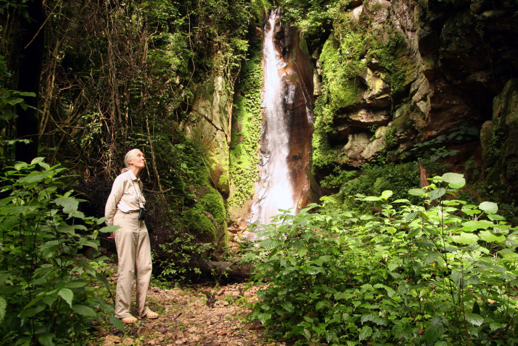 "Jane Goodall beside a waterfall in Gombe National Park.Shooting ""Janes's Journey"", Tansania 1/2008 with Jane Goodall"
