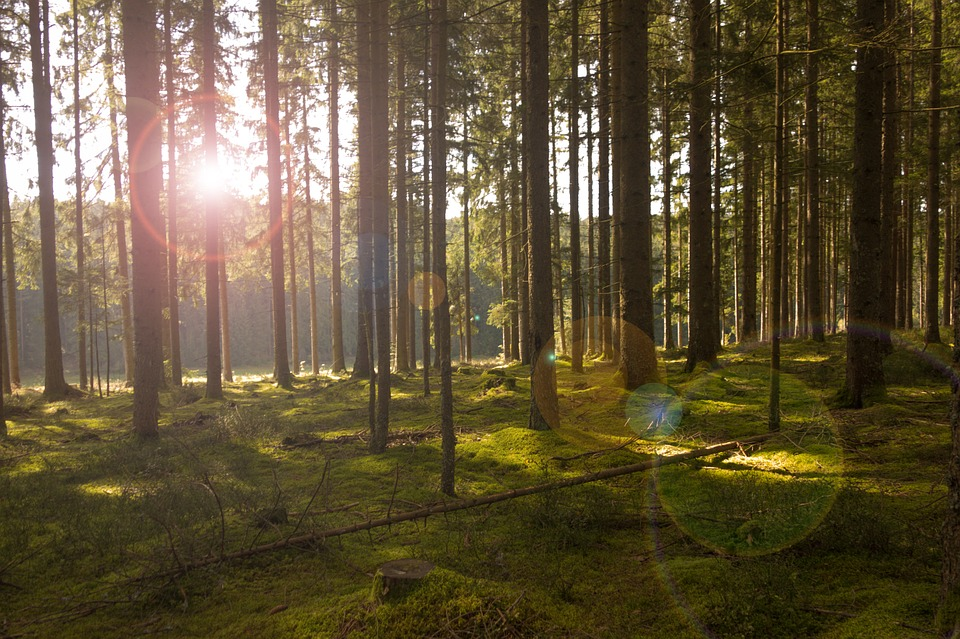 forest-638124_960_720
