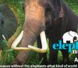 World Elephant Day 2016
