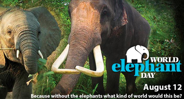 World-Elephant-Day-2016-Blog-Photo.jpg