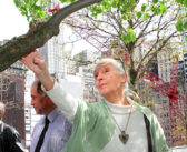 The Tree that Survived 9/11