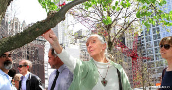 Jane Goodall visits Survivor Tree in NYC