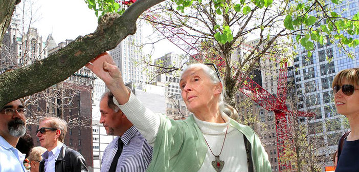 Jane Goodall visits Survivor Tree in NYC