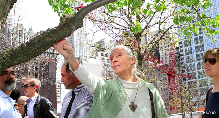 Dr. Jane Goodall's Reflections on 20th Anniversary of 9/11