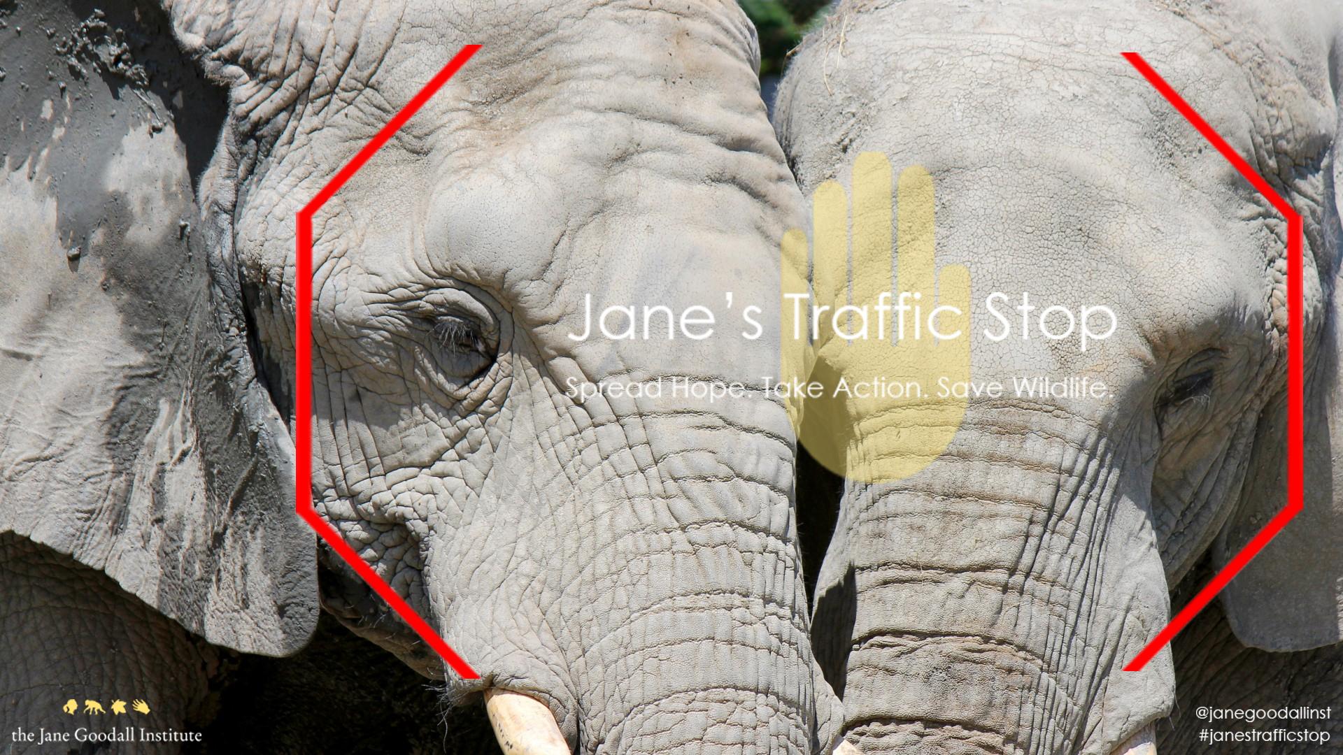 elephant jts
