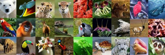 Will CITES Conference Provide Hope for Wildlife?