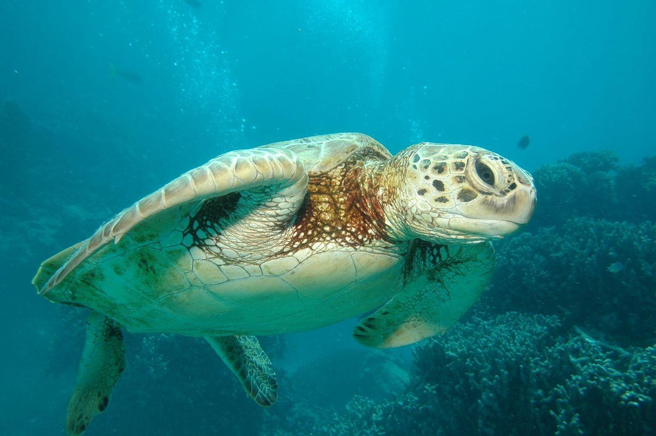 1280px-Great_Barrier_Reef_Cairns_Australia