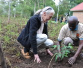 JGI's ONE GOOD STORY: Engineering a Forest