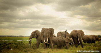 The Ivory Game and China's New Year's Commitment to End Ivory Trade