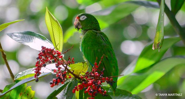Parrot Eye Closed WM CR