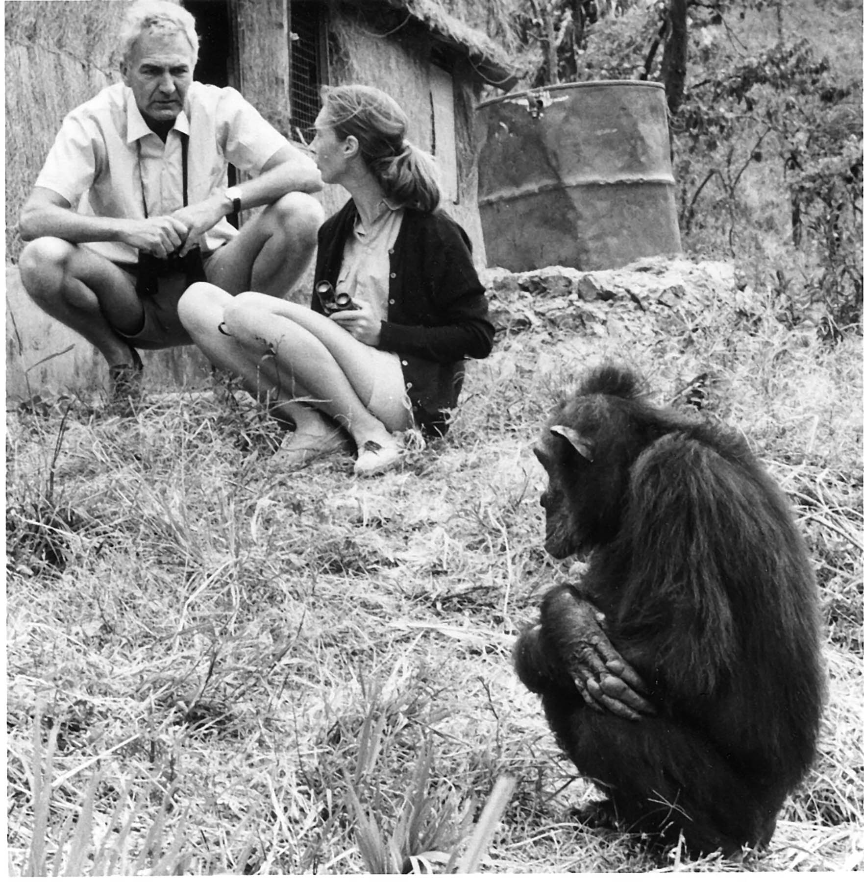 Robert Hinde, Jane Goodall, and Flo in Gombe Stream Wildlife Preserve.