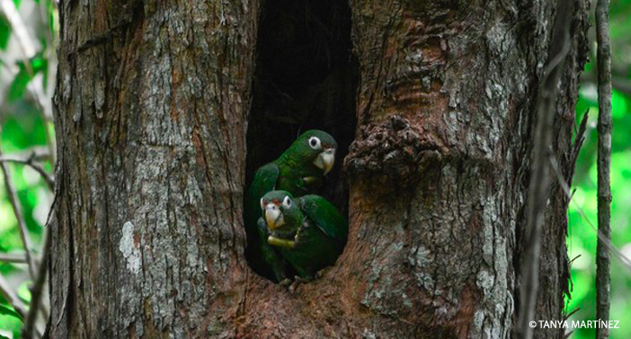 Two Parrots In a Tree WM CR
