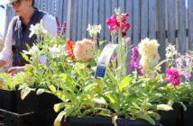 SHHS Roots & Shoots Garden