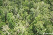Peat Swamp