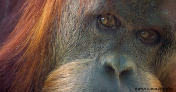 Primate Blog