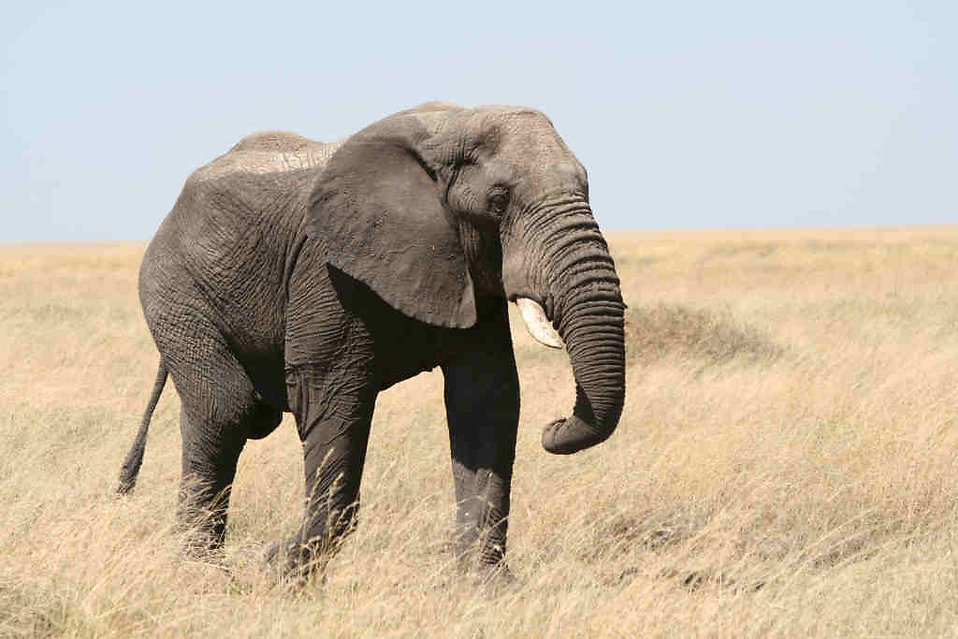 10004-an-elephant-in-the-wild-pv