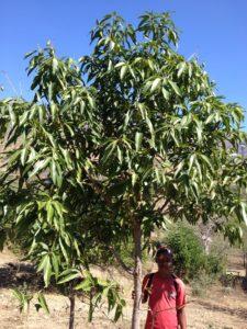 AMOS TREE