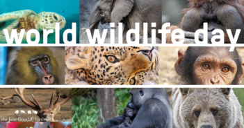world wildlife day graphic 2