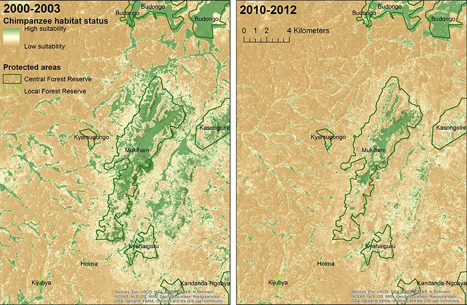 Uganda chimp health zoom WEB