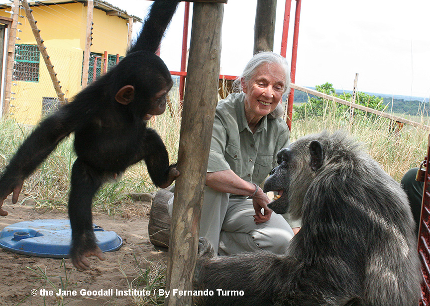 Jane Goodall with LaVielle and her new little friend at the Tchimpounga Chimpanzee Rehabilitation Center in the Republic of the Congo.