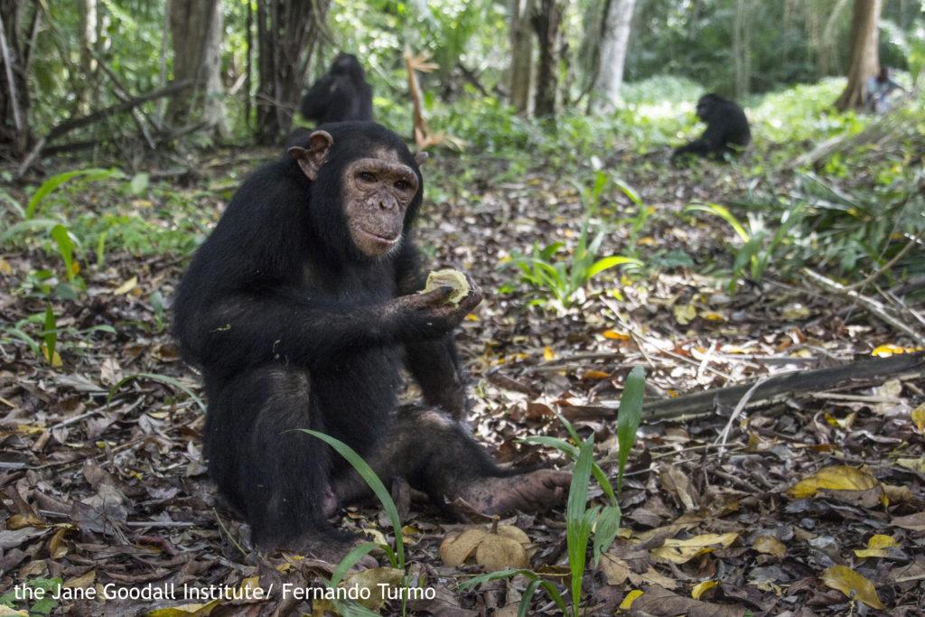 Motambo at Ngombe island 17 November 2015 credit