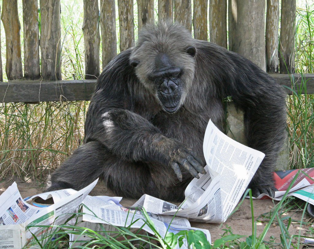 LaVielle reads the newspaper