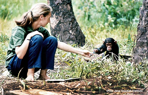 Young researcher Jane Goodall with baby chimpanzee Flint at Gombe Stream Reasearch Center in Tanzania.