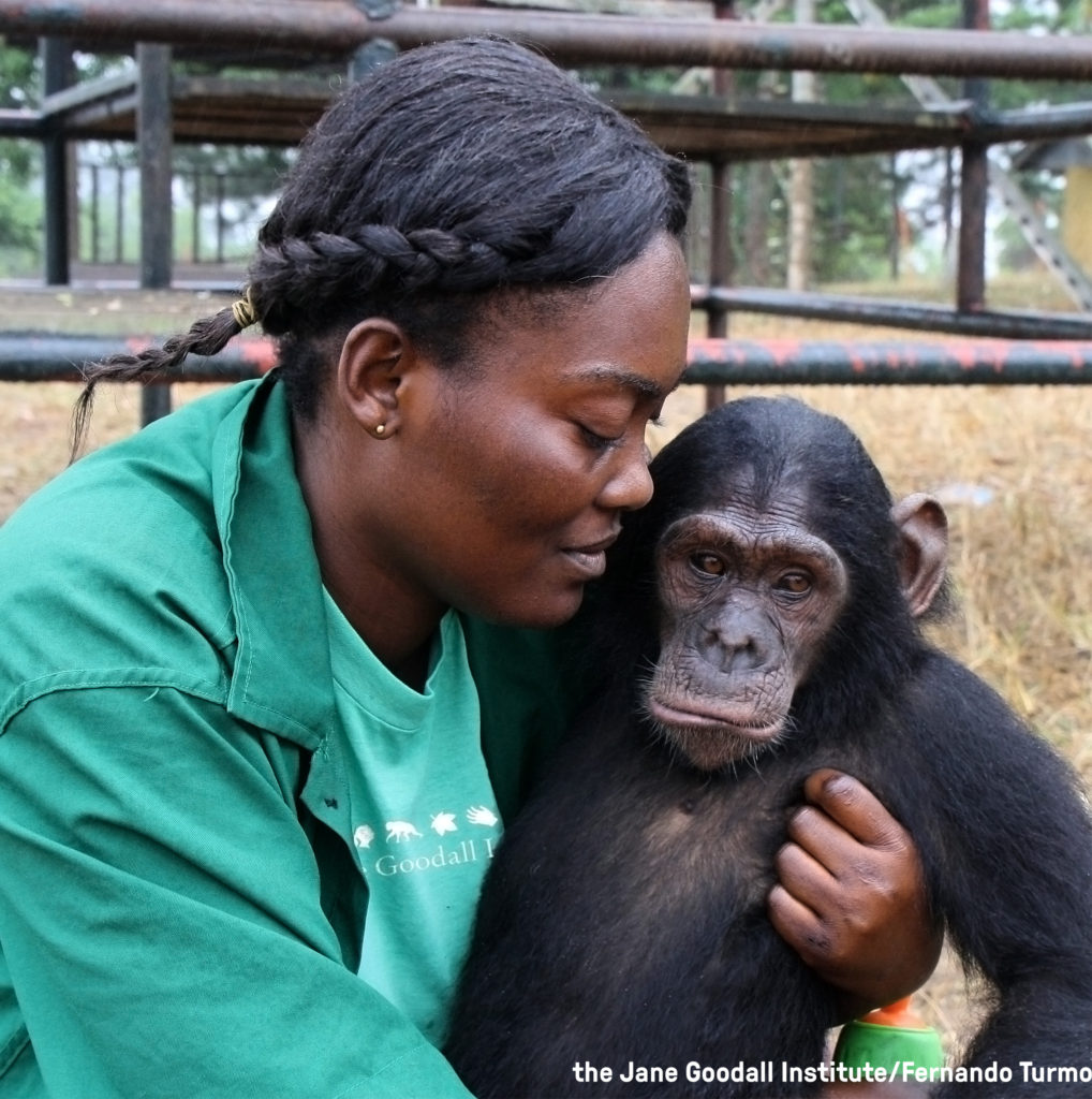 Orphan Mambou and caregiver Cristel at the JGI Tchimpounga Chimpanzee Rehabilitation Center in the Republic of Congo