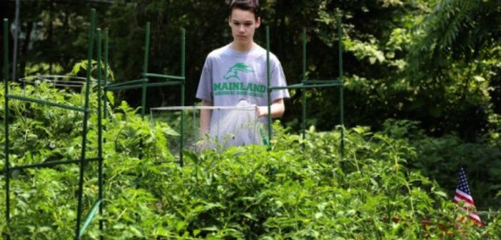 "Bradley tending to the ""victory garden"" for veterans at Post 295."