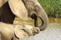 addo-elephant-park-1659653_960_720