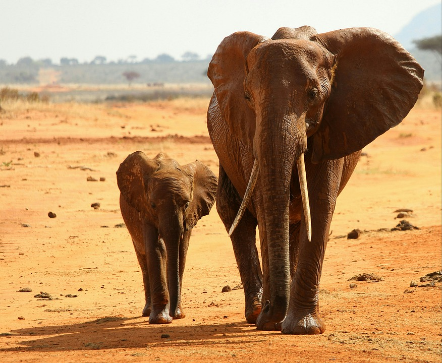 elephant-2254627_960_720
