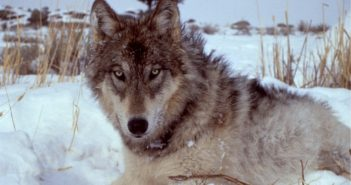 Now is the Time to Fight for the Endangered Species Act