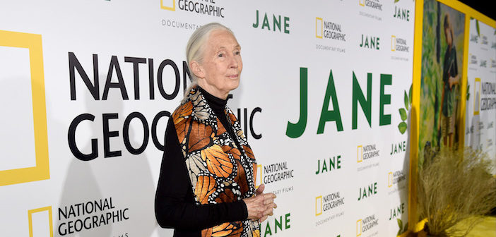 "HOLLYWOOD - OCTOBER 9: Dr. Jane Goodall attends the Los Angeles premiere of National Geographic Documentary Films ""Jane"" at the Hollywood Bowl on October 9, 2017 in Hollywood, California.  (Photo by Frank Micelotta/NatGeo/PictureGroup)"