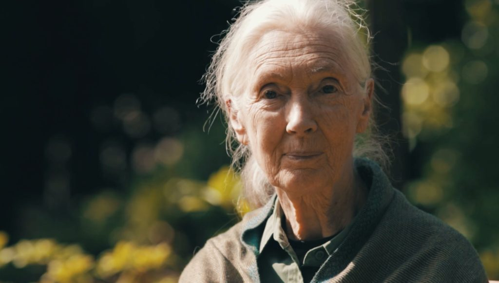 jane_goodall_saving_the_wild