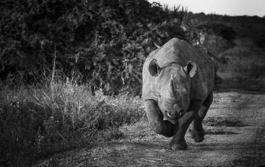 yardley_black_rhino_landscape
