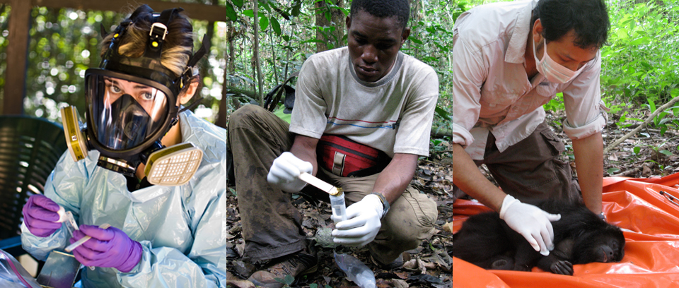 Pathogens, Primates & Human Populations, OH MY! An Interview with Thomas Gillespie