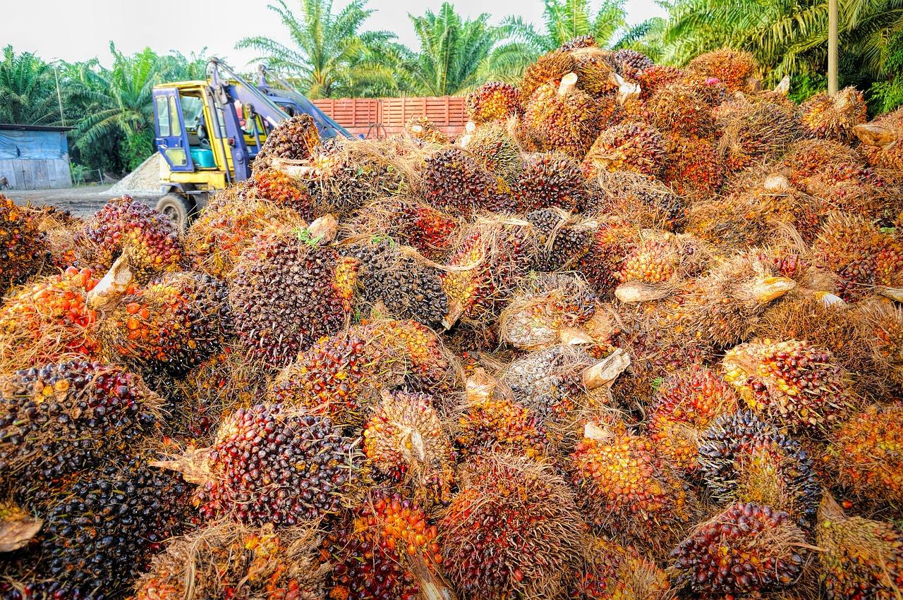 palm-1464654_1280