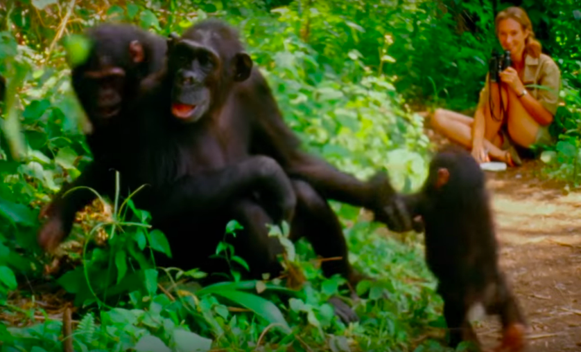 Jane-goodall-still-from-documentary.png.838x0_q80