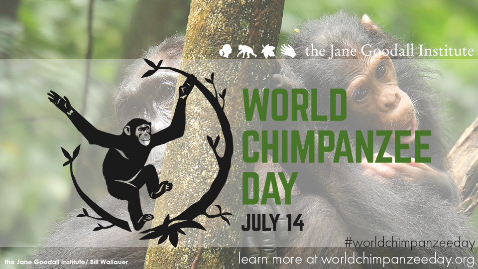 Image result for google image search ,Happy World Chimpanzee day